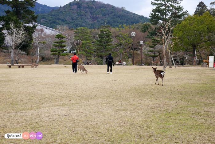 bookmashare-review-howto-blogger-travel-plan-hotel-airline-pantip-kansai-kyoto-kanazawa-osaka-takayama-shirakawago-nara-138