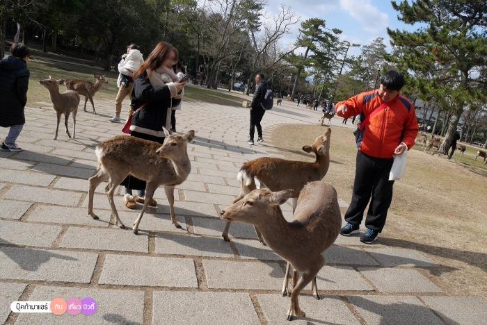 bookmashare-review-howto-blogger-travel-plan-hotel-airline-pantip-kansai-kyoto-kanazawa-osaka-takayama-shirakawago-nara-141