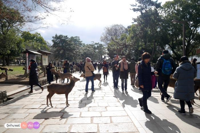 bookmashare-review-howto-blogger-travel-plan-hotel-airline-pantip-kansai-kyoto-kanazawa-osaka-takayama-shirakawago-nara-145