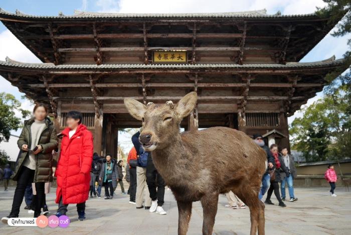 bookmashare-review-howto-blogger-travel-plan-hotel-airline-pantip-kansai-kyoto-kanazawa-osaka-takayama-shirakawago-nara-146